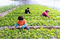 绿色生态成为旅游经济新的增长点
