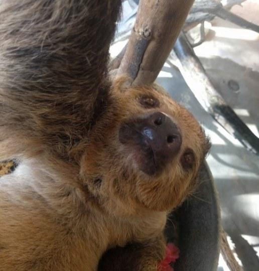 谷歌联手《疯狂动物城》进行动物自拍宣传活动