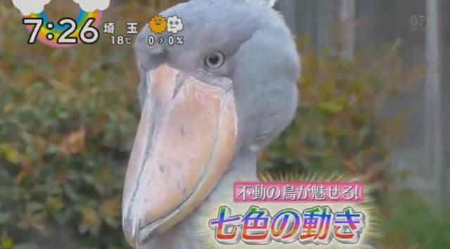 紅到歷史人物也來蹭熱度?日本綜藝播鯨頭鸛特輯石田三成躺槍