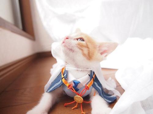 日推惊现猫咪版山姆切,堪称灵魂coser!