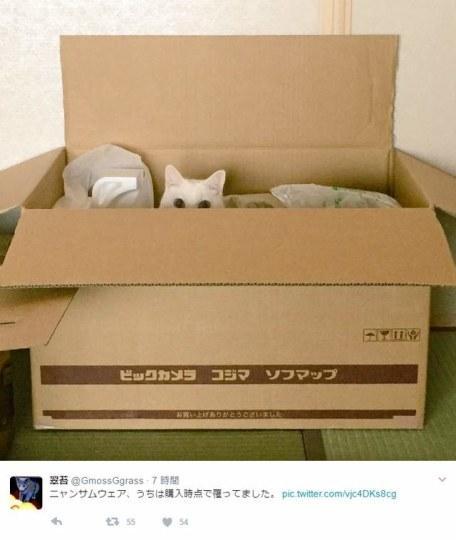 全球铲屎官注意!猫咪才是世上最惊人的勒索病毒