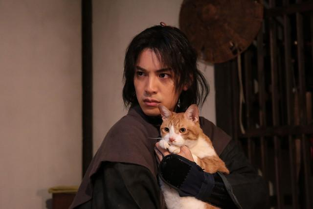 猫,你当我爹吧!《猫侍》原班人马打造《猫忍》