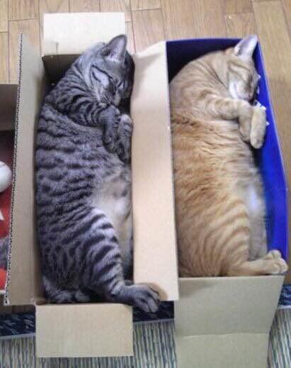 治病救不了中国人!被带坏的啪猫党