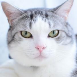 猫咪漫画家涉嫌抄袭 不谢罪引发《萝莉时间》作者声讨