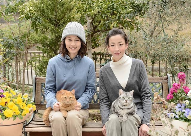 前田敦子加盟咕咕是只猫2 演宫泽理惠助手