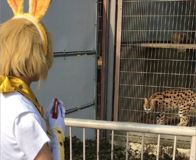 《兽娘动物园》官方活动上死宅猫爪卖萌