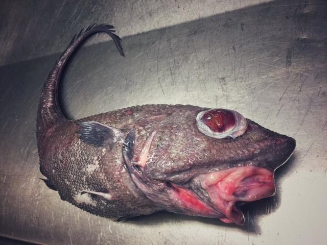俄罗斯渔夫捕获怪物 这不是路飞和悟空的食材吗?