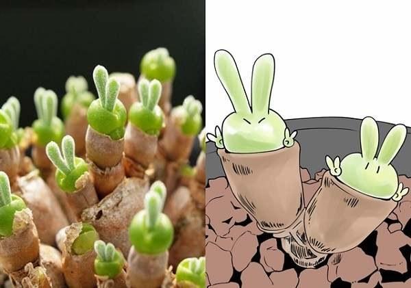 兔兔敲可爱 日推疯转元气兔多肉植物