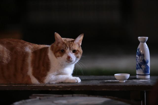 《猫侍》玉之丞友情出演《猫忍》