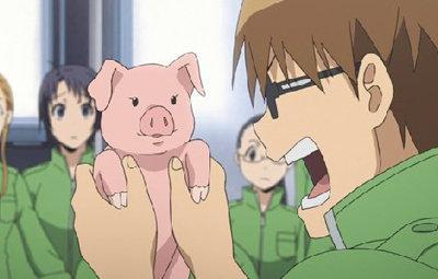 小林礼奈去养猪新进展:照顾发情小猪很有趣