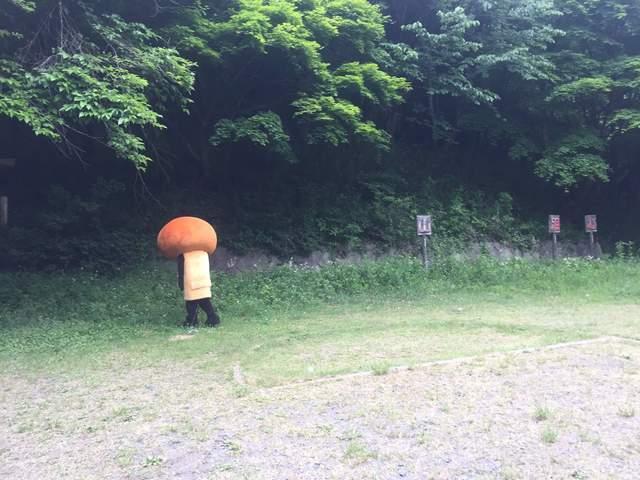 垂头丧气的香菇蹿红网络