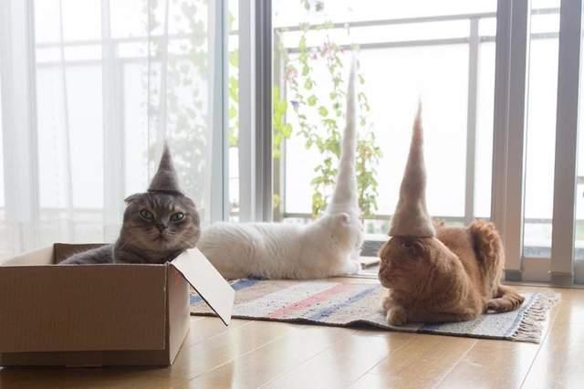 日网友用猫毛为猫咪做巫师帽