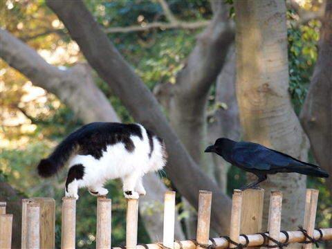 猫咪与乌鸦竟成好友 呆萌扭蛋即将面世