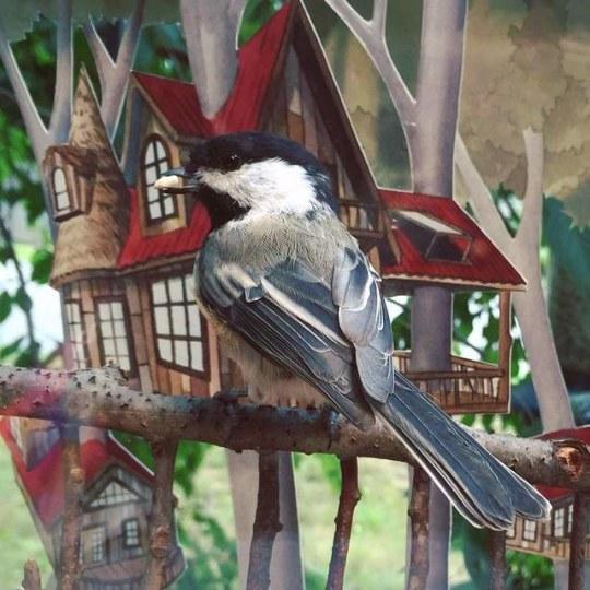 空手套小鸟 美女插画家为鸟儿制作小屋