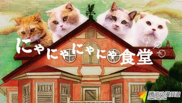 阿澄佳奈 井泽诗织等猫语出演真猫网络剧
