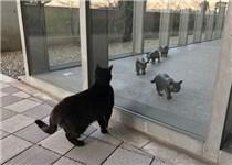 日本美术馆举行猫咪美术展 却拒绝真猫进入