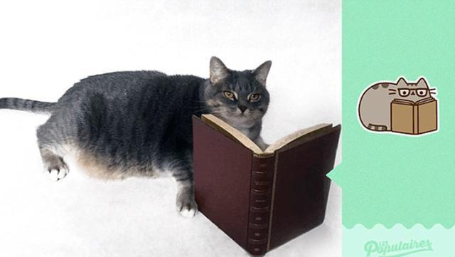 喵COSER!宠物猫完美还原漫画角色