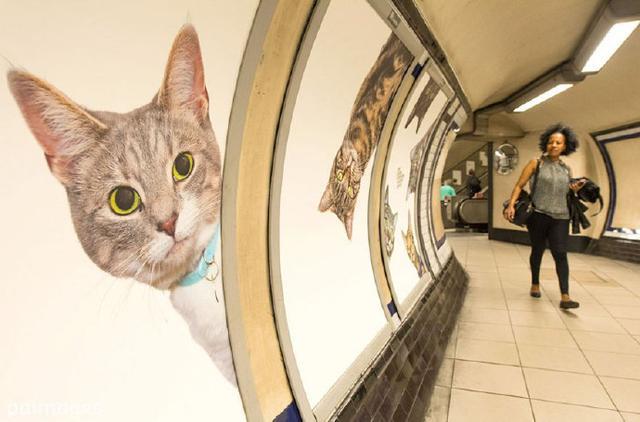 超有爱!喵星人入侵伦敦地铁萌坏蓝星人
