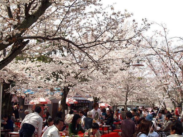 除了圣地巡礼 外国人还想去日本干什么?