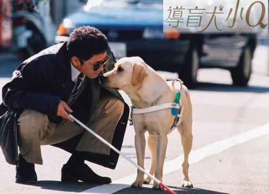 嫌狗狗脏?拒载导盲犬的日本司机丢饭碗