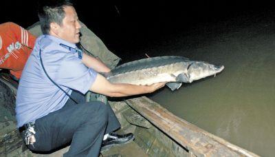 江中捕条怪鱼背上插根天线 渔民吓一跳(图)