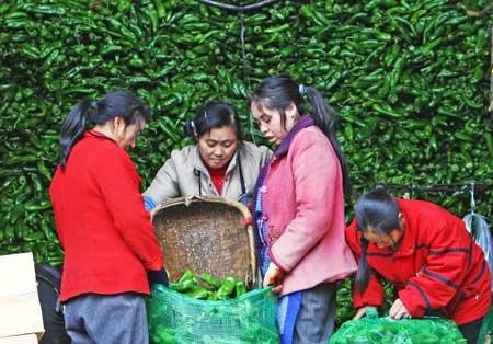 冰雪来袭 重庆青椒批发价下跌白萝卜涨价