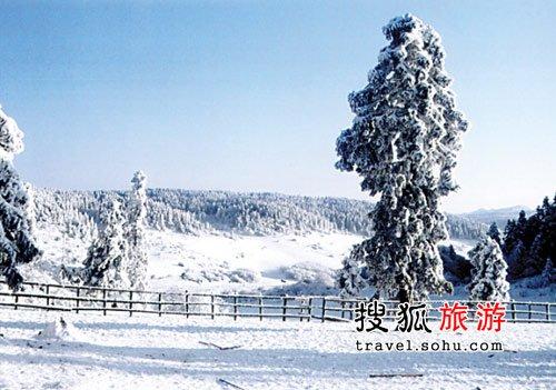 秀气雪景浪漫过冬 仙女山雪原旅游节等您来