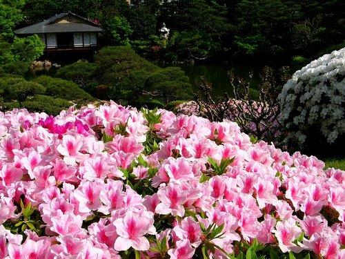 春光明媚赏杜鹃—南川金佛山