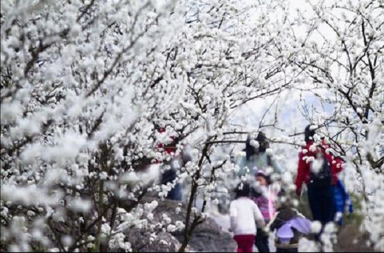 周末一家三口去赏花 踏青野营野炊放风筝图片