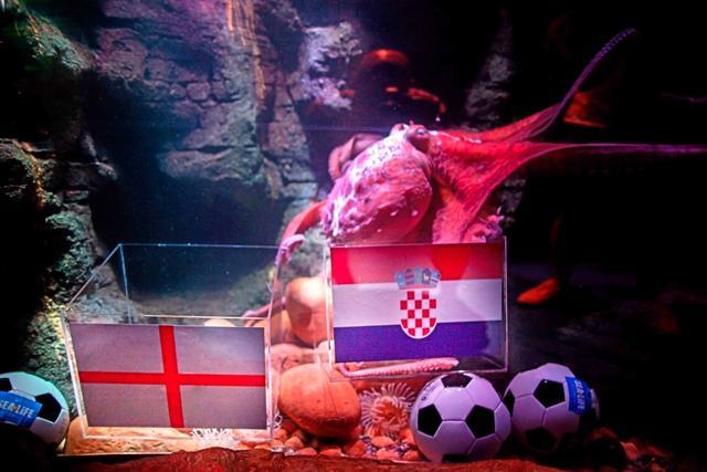 冷门世界杯结果难测 重庆章鱼逆风翻盘再续章鱼保罗传奇