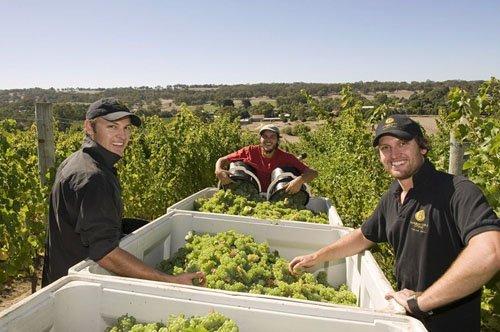 澳州手工红酒登陆重庆  澳纽特邀您共同品尝