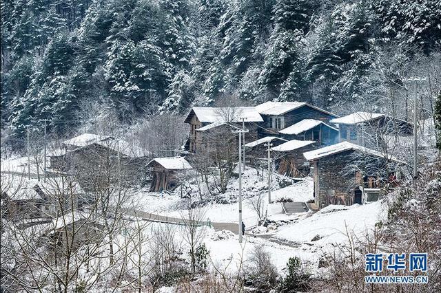 城口:白雪却嫌春色晚 故穿庭树作飞花