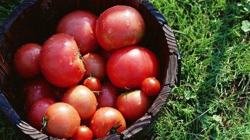 春吃5种菜养生!4种食物最养护肝!