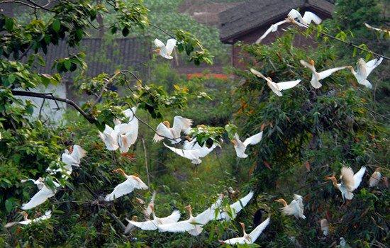 壁纸 动物 花 鸟 摄影 桌面 550_350