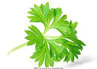 芹菜可以治疗高血压吗 哪些食物可以降血压?