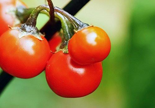 晚餐吃一个番茄 三个月疯瘦15斤
