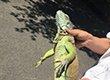 """男子发现阳台盘着一条绿色""""大蛇"""""""