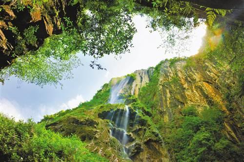 秀山:映山红红遍川河盖 格桑花绽放武陵山