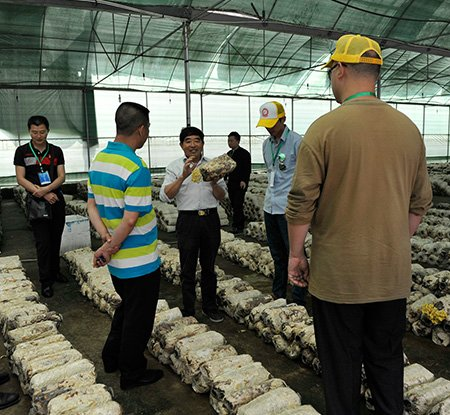 点子达人参观五宝禾锦食用菌基地