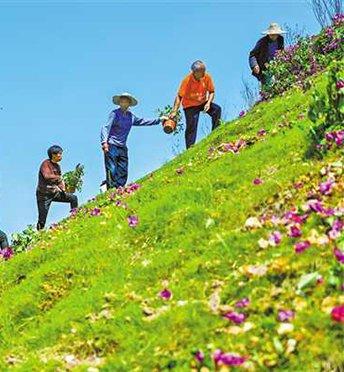 绿化美化坡坎崖