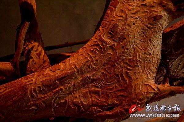 在枯木败根间出现一个个形神兼备,生动异常的文字,而且还有一些图案