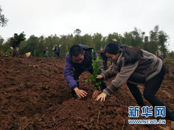铜梁大学生夫妻回乡创业 立志建设生态柠檬村