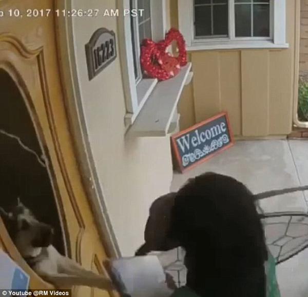 女子发传单牧羊犬打破门玻璃扑出吓坏