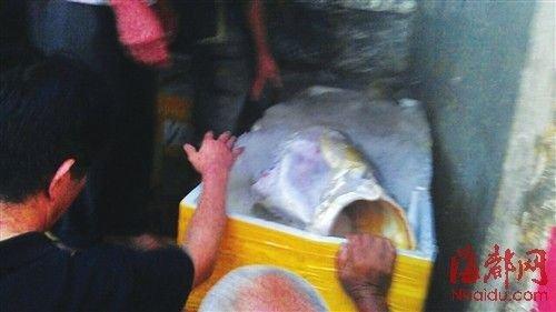 福建渔民捡获160斤黄唇鱼 卖出300万元(图)