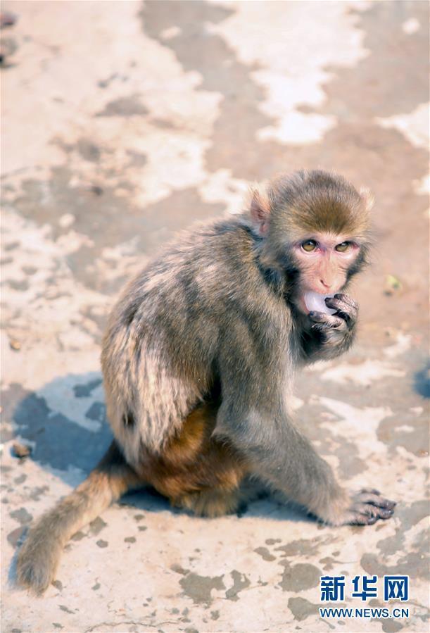 山西太原:动物们的防暑方案