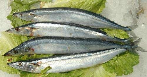 鲥鱼 河鲀 长江三鲜的营养价值