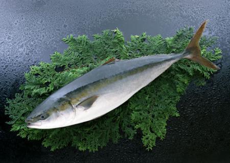 吃海鲜?深海鱼选食草的 清蒸煎烤护营养