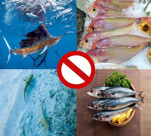 准妈妈注意 这四种鱼不能吃