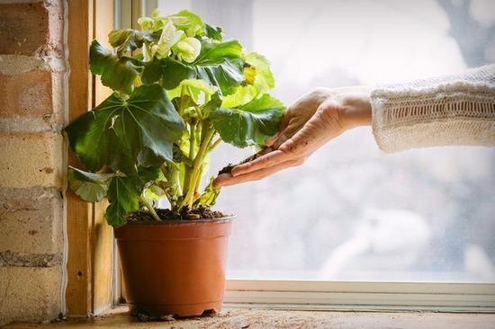 将剩余食物变成沃土 它能减少90%食物浪费