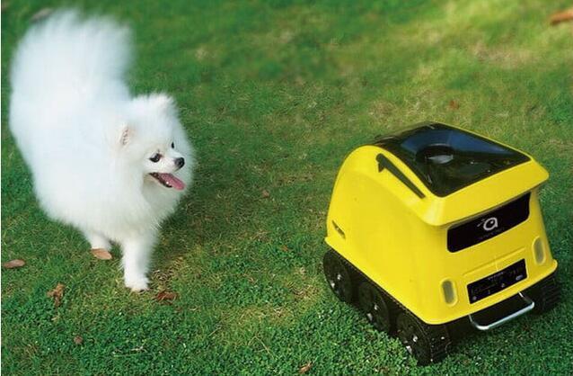 有了这个机器人 狗狗自己在家也不会孤单